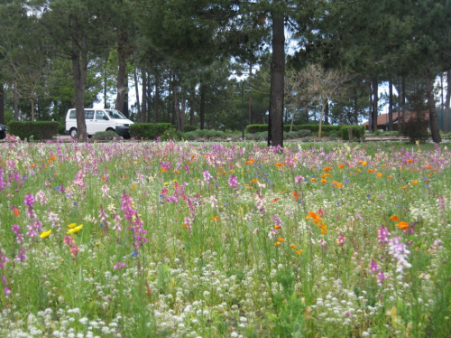 Nova Mistura de Sementes Landlab Prado Florido Bio+
