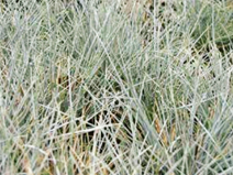 Tapete Landlab Sedum Grass