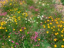 Tapete Landlab Herbáceas S