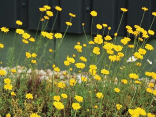 Tapete Landlab Amarelo Florido
