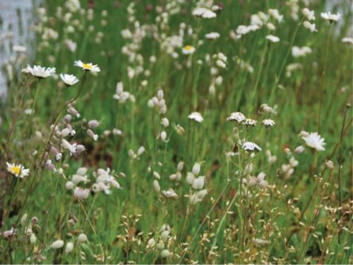 Tapete Landlab Branco Florido